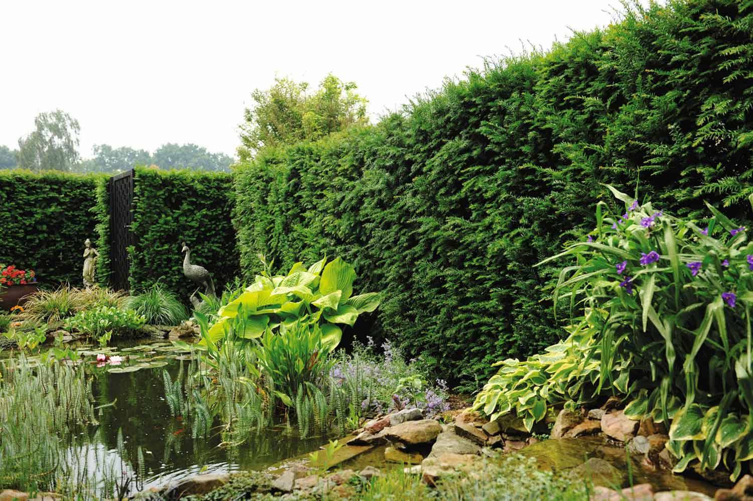 Taxus Hedging Units