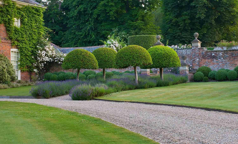 contemporary garden designers kent 4 salix alba var sericea with